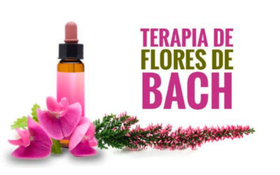 Flores de Bach para la Familia